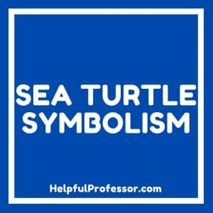 sea turtle spirit animal symbolism